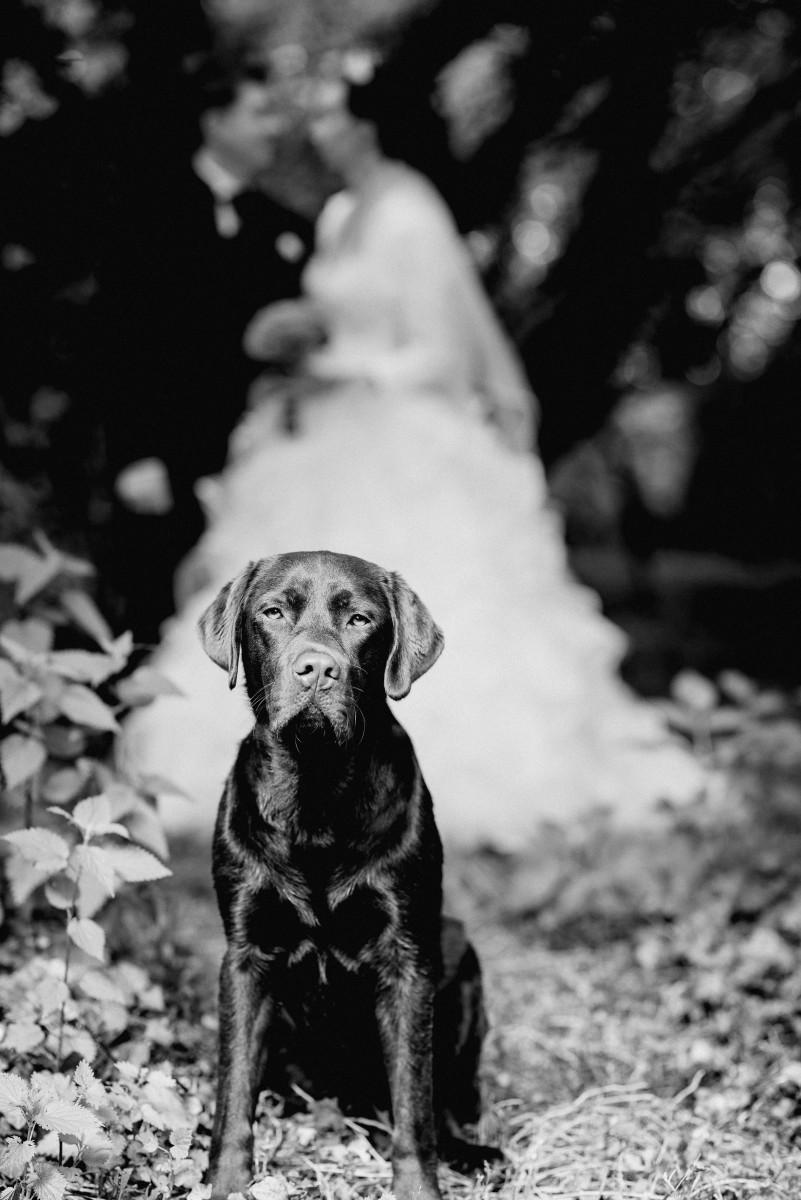 Hund an der Hochzeit