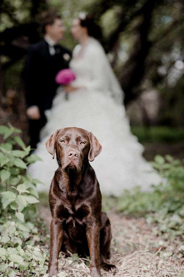 Hochzeit mit dem Haustier