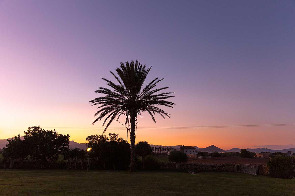 Garten mit Palme bei Sonnenuntergang